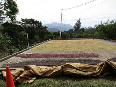 5LBS Guatemala Miramundo Unroasted Greeen Coffee Beans