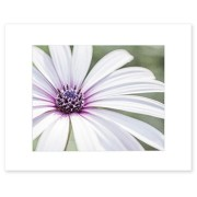 8x10 Matted Photographic Print - Fresh Floral Wall Art, 'Bed of Petals'