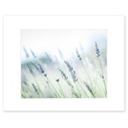 8x10 Matted Photographic Print - Rustic Floral Wall Decor, 'Buds of Lavender'