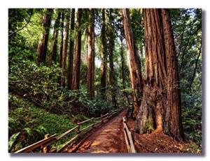 "Art Assembly Presents Michael de la Paz's ""Primordial Forest"" - Photograph on Canvas - redwoods wall art decor photo print painting artwork picture"
