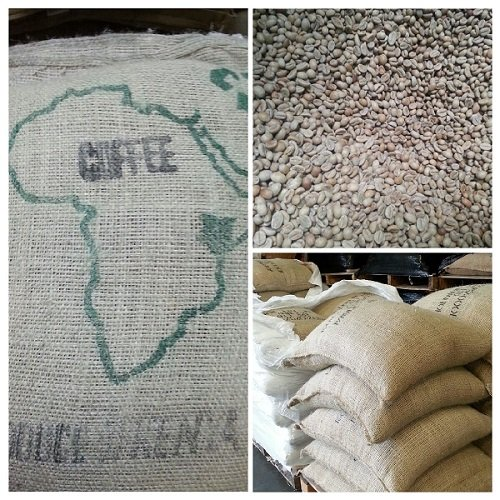 5LBS Kenya Gondo Unroasted Green Coffee Beans