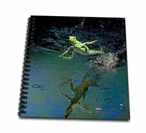 Danita Delimont - Costa Rica - Green basilisk, plumed basilisk, Costa Rica - SA22 AMR0011 - Andres Morya Hinojosa - Drawing Book
